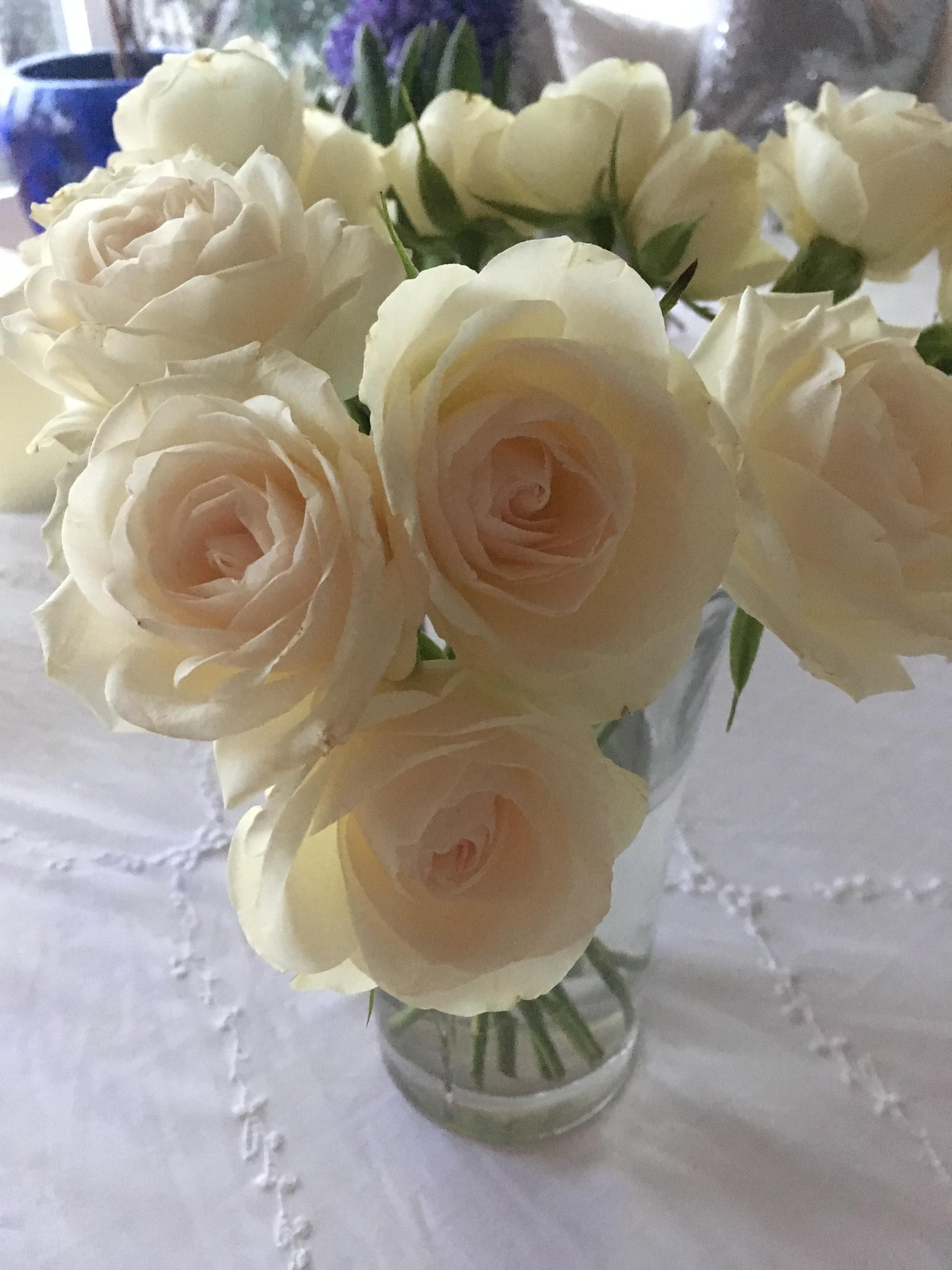 Afskårne Roser roser | l hoejers blog | side 4